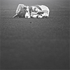 edem icon'z Icon46