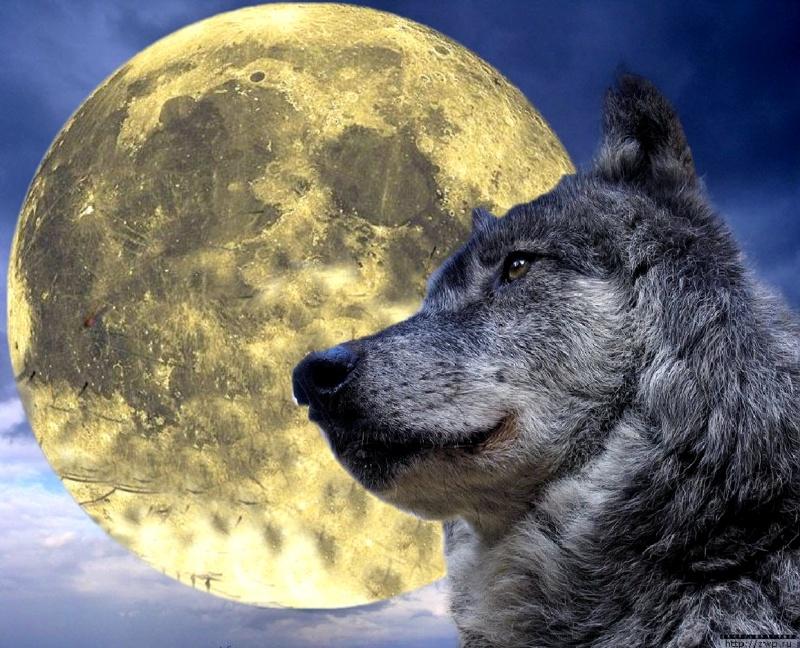 farkasklán